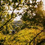 Maringotka na lúke pri zapadajúcom slnku