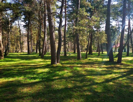 Duchonka-kemp